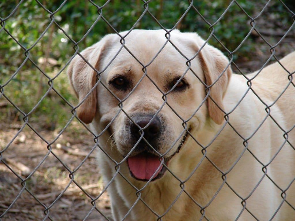Perro detrás de valla