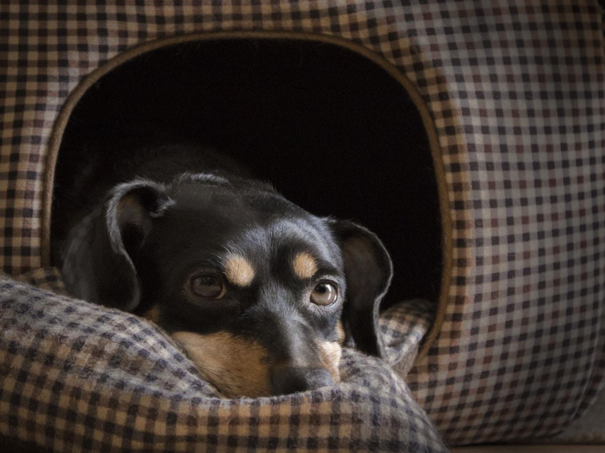 Perro descansando en una casita