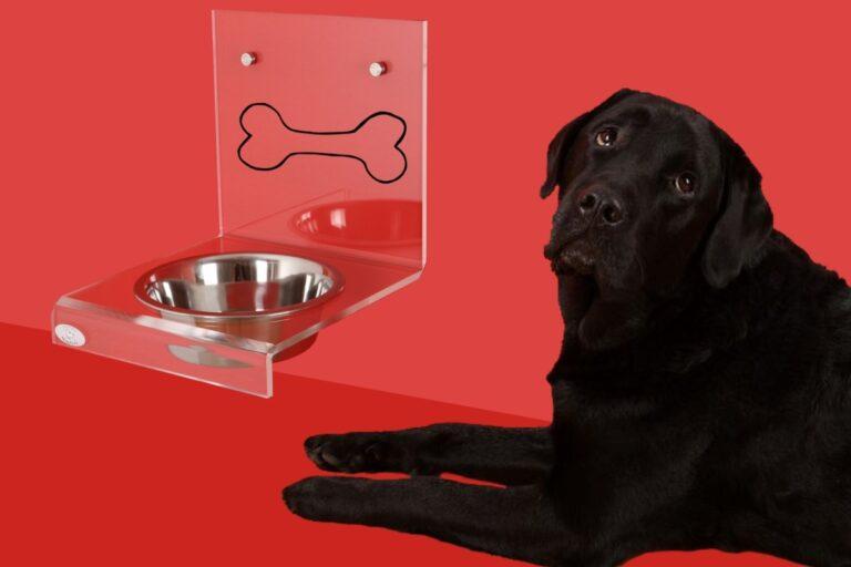 Perro negro ante un bol de agua