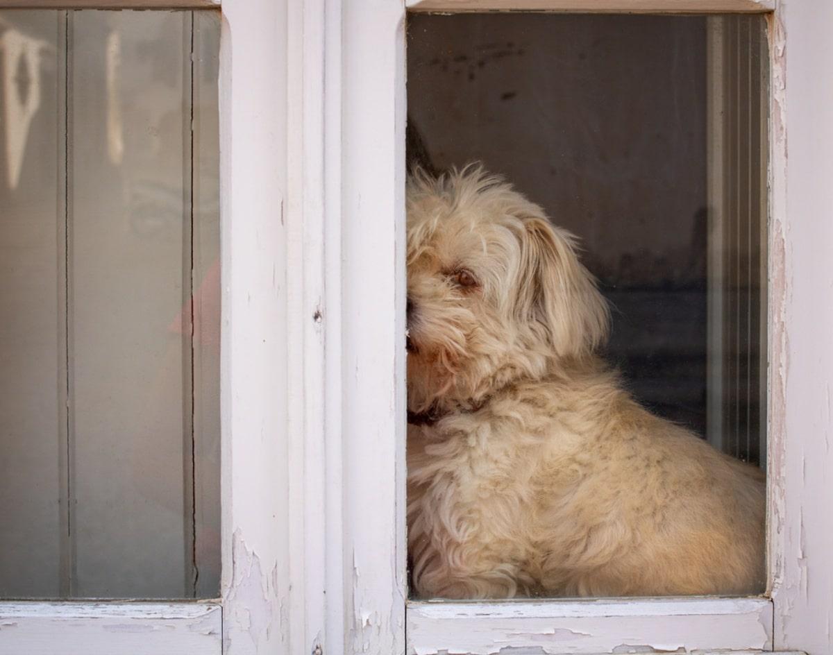 Perro mirando desde una puerta
