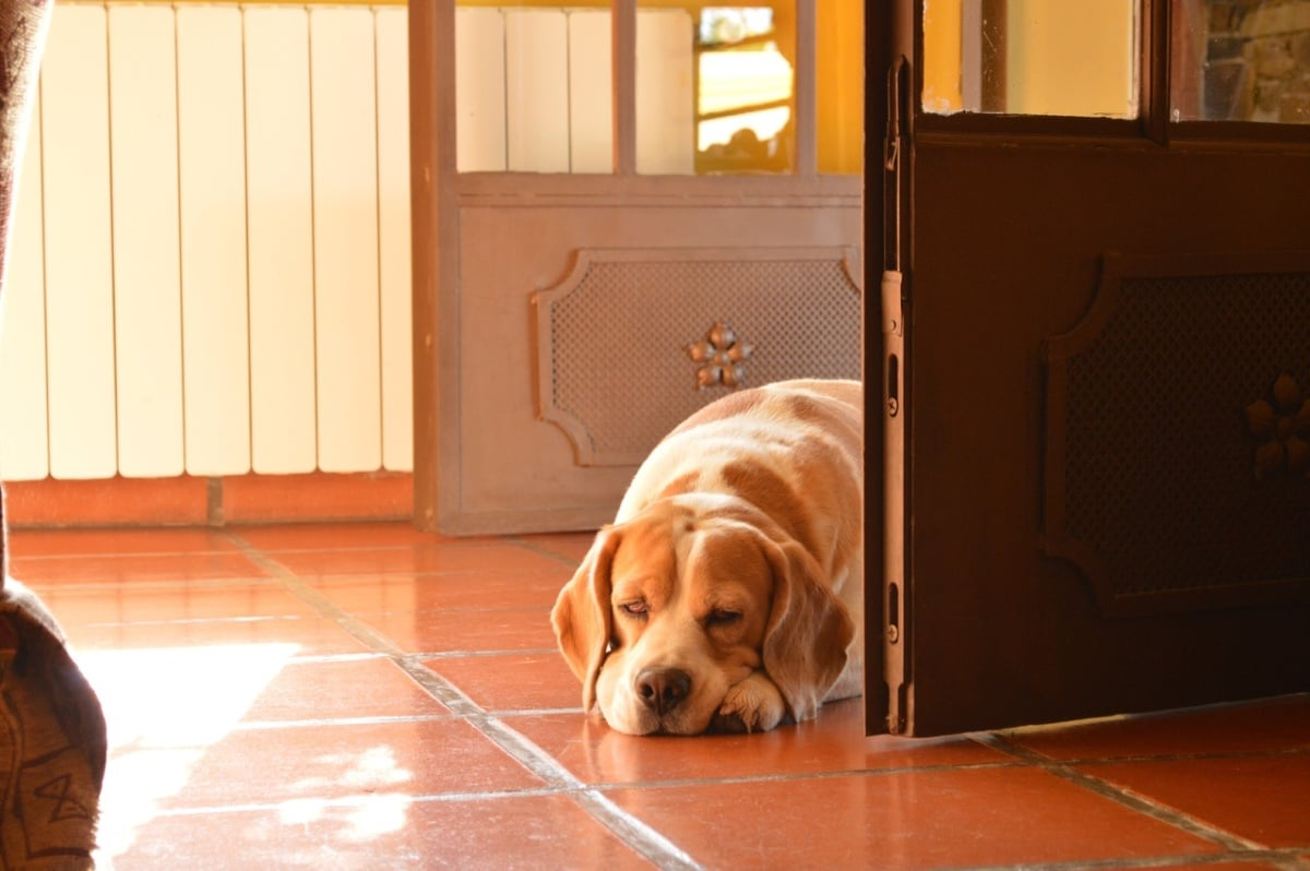 Perro en una puerta