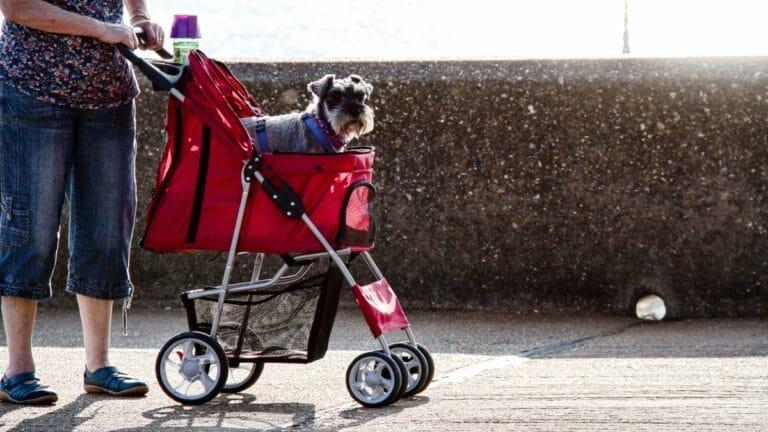 Carro para perros rojo