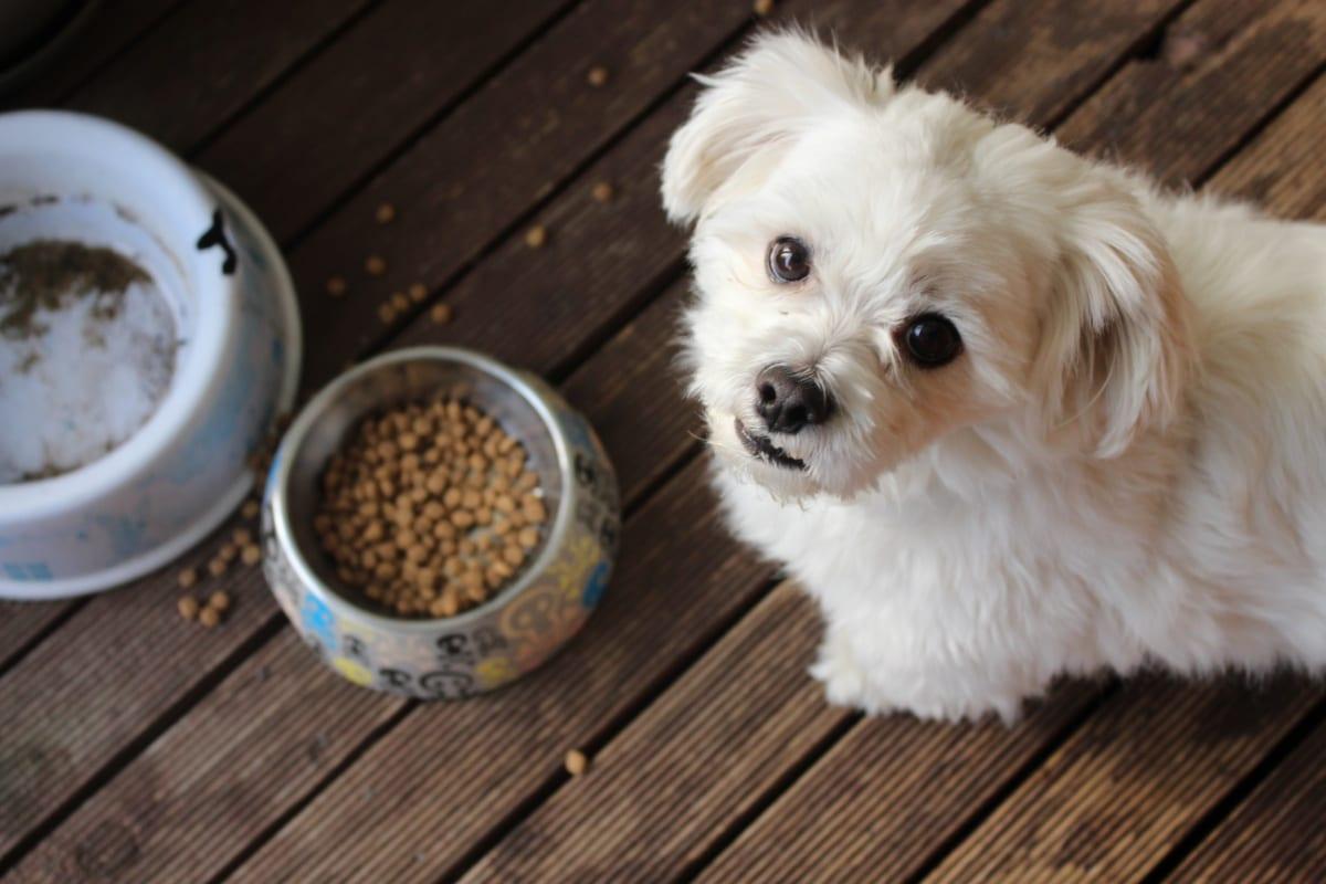 Câine ridicând privirea