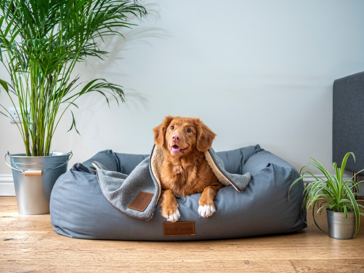Un colchón para perros grandes