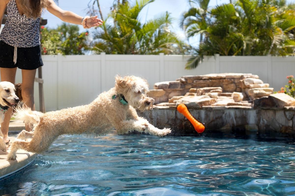 Câine sărind în piscină