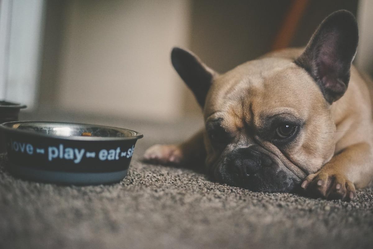 Un câine trist lângă un castron gol