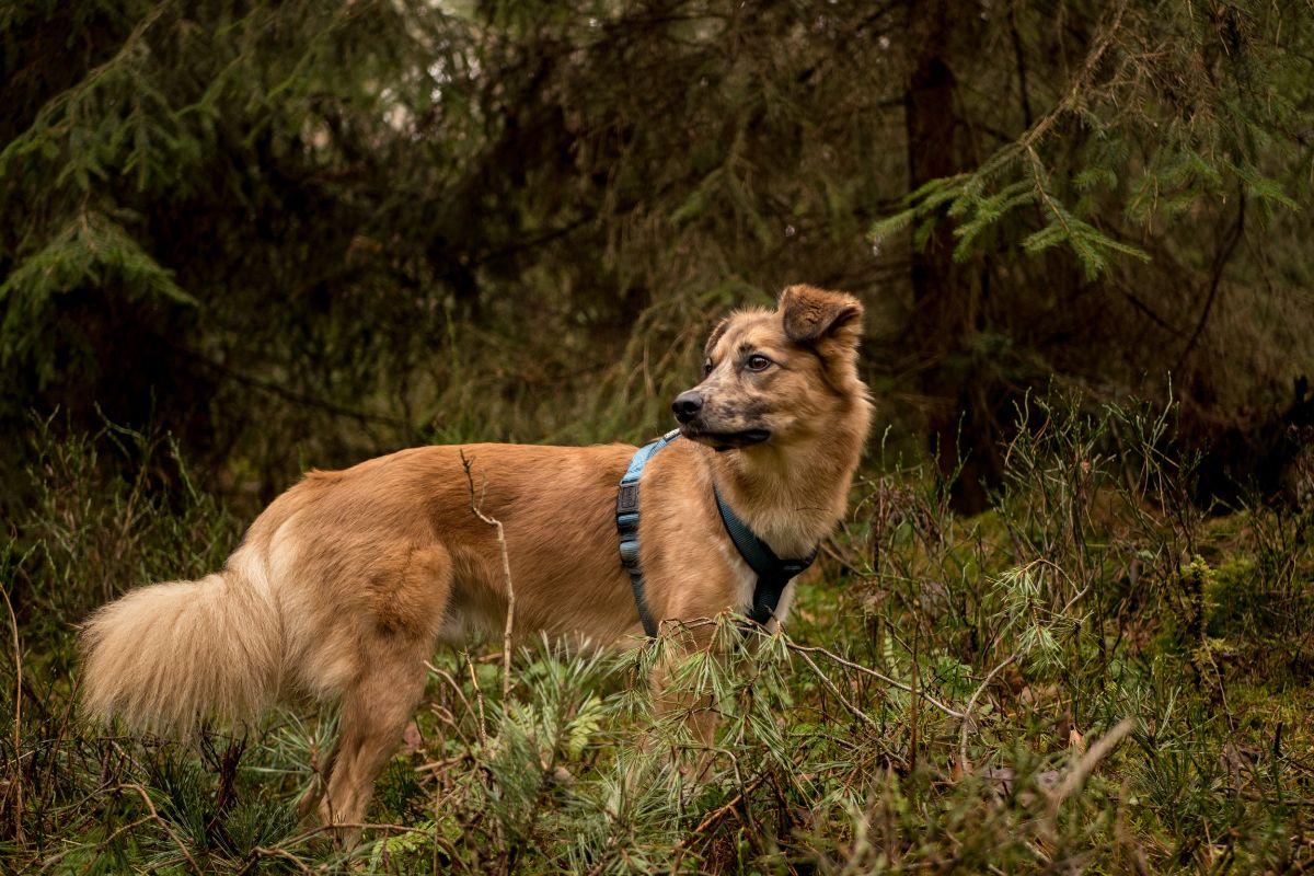 Un perrete en el bosque
