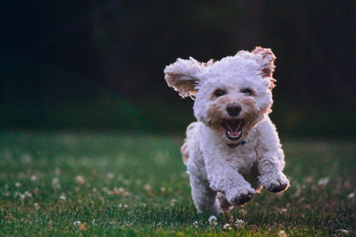 Un perro corriendo por el campo