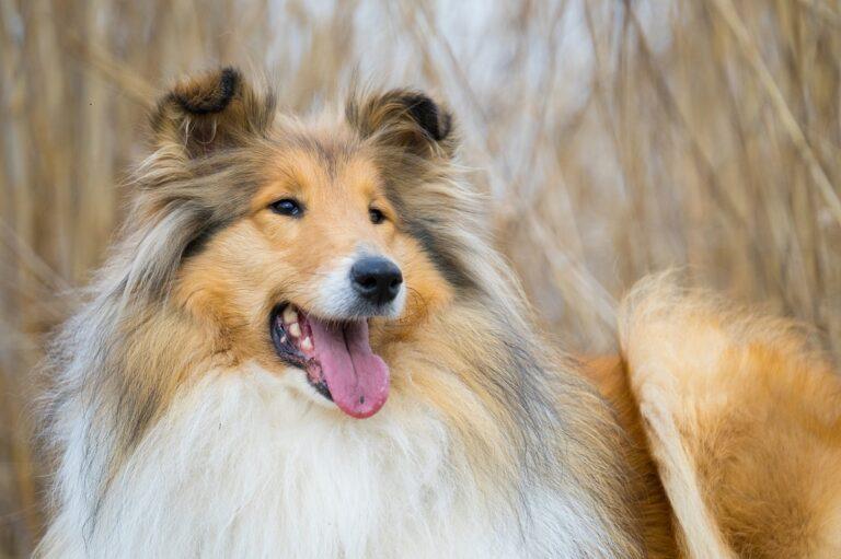 Furminator en Perros
