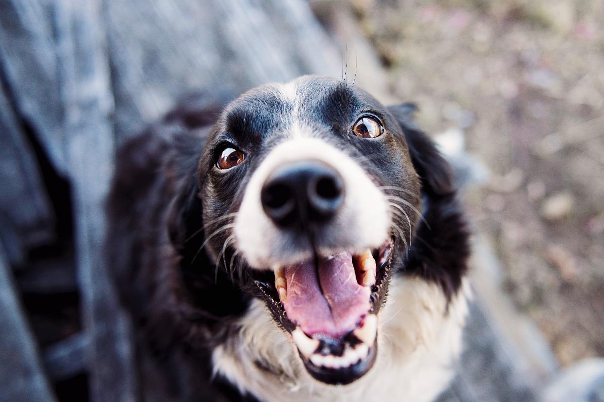 golosinas para mejorar dientes de animales