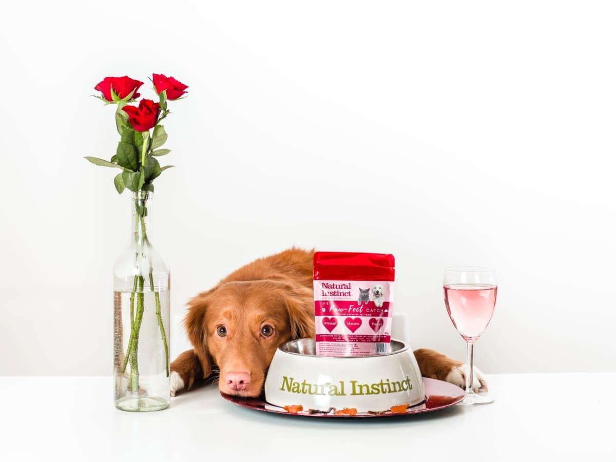 Un perro sentado a la mesa con su bol