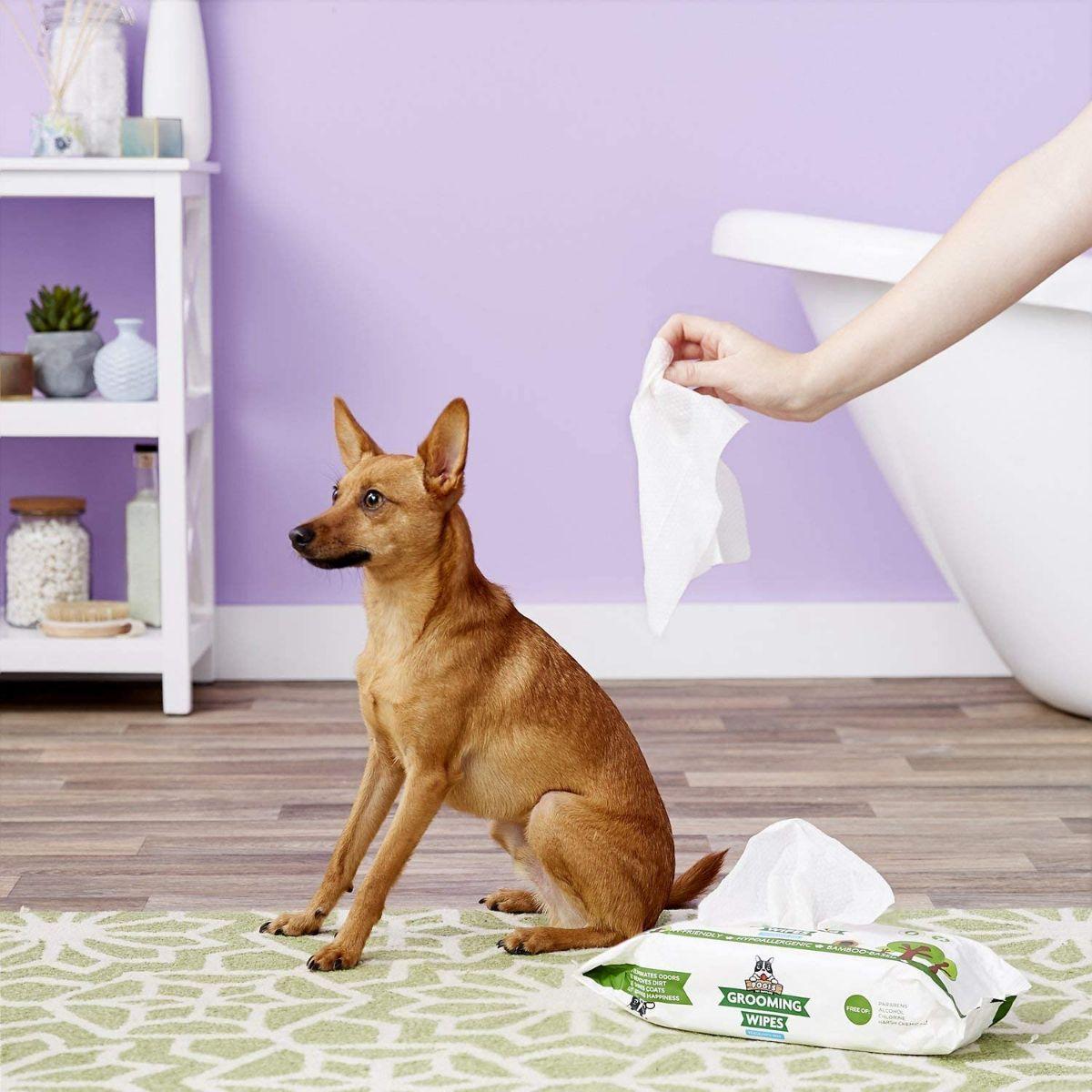 Мокри кърпички за кучета