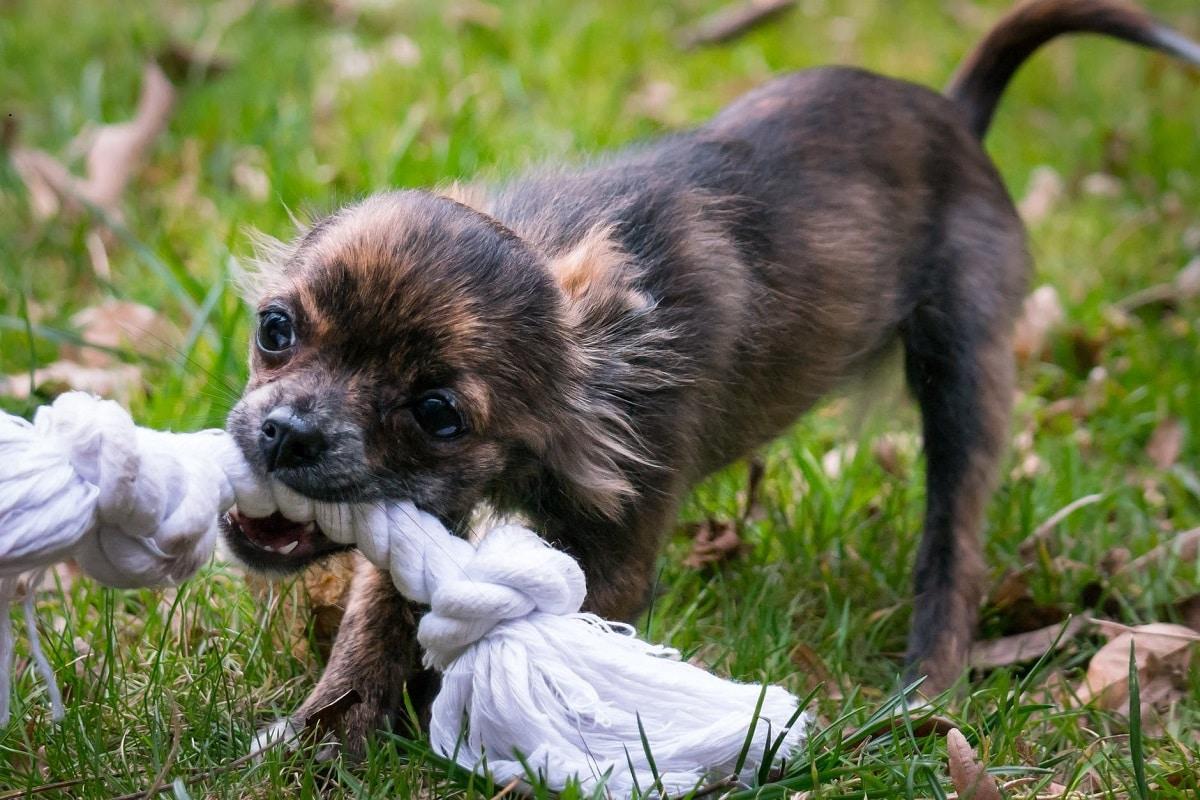 Beneficios de un mordedor para perros