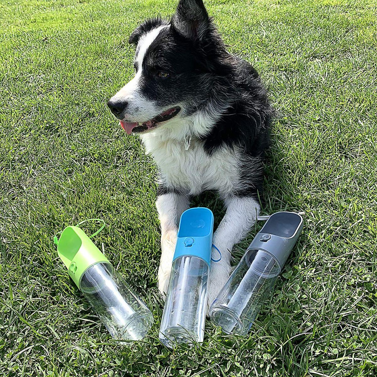 бутилка вода за кучета