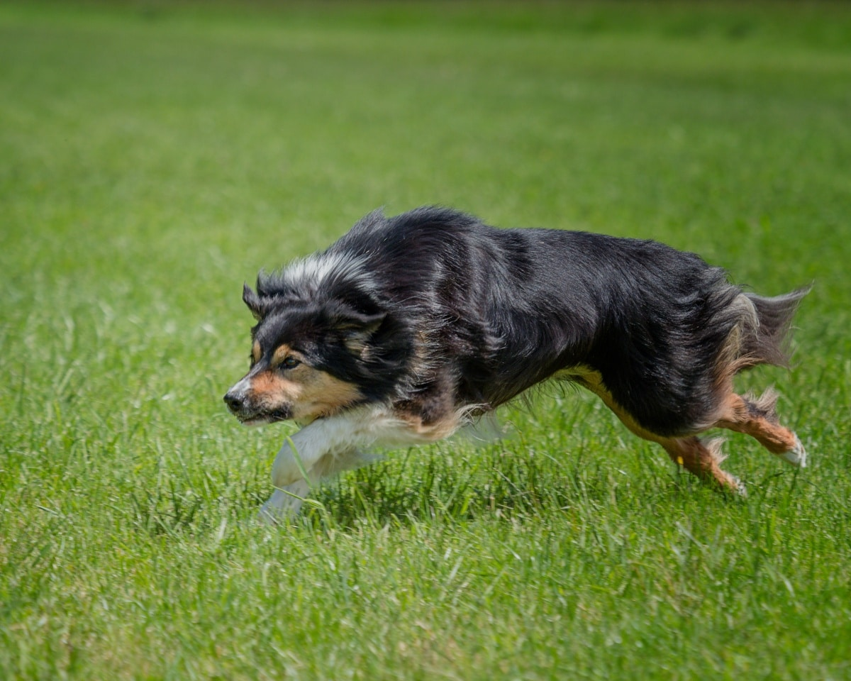 Hay productos para aplicar en el césped que ahuyentan a los perros