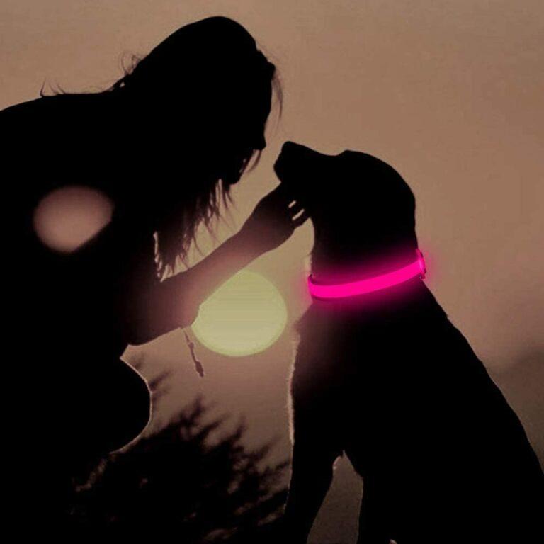 guler de câine luminos