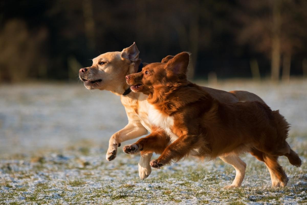 Los repelentes de perros hacen que estos animales huyan
