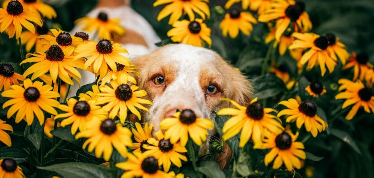 Perro entre las flores del jardín