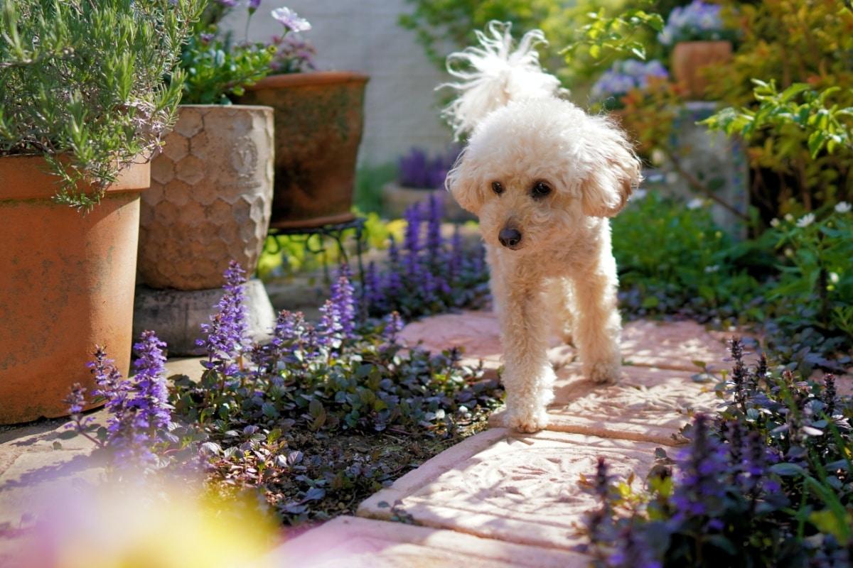 Un perro olisqueando en el jardín