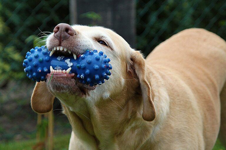 Cârlig de câine