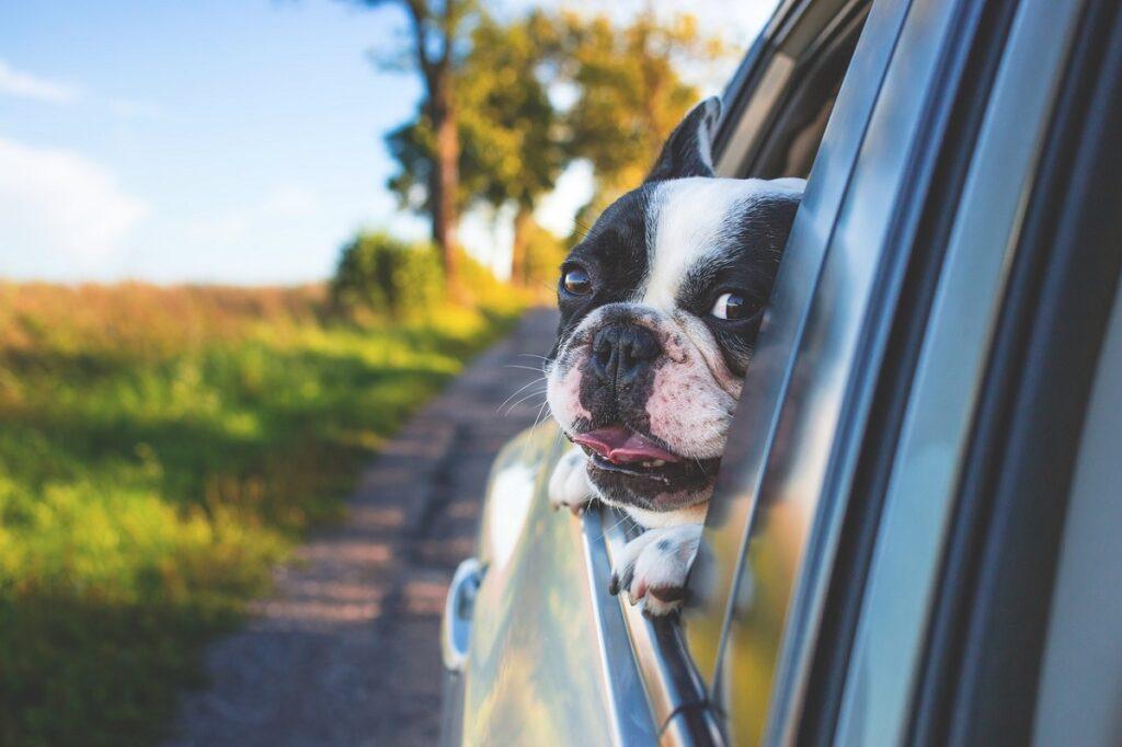cestovanie autom s domácimi zvieratami