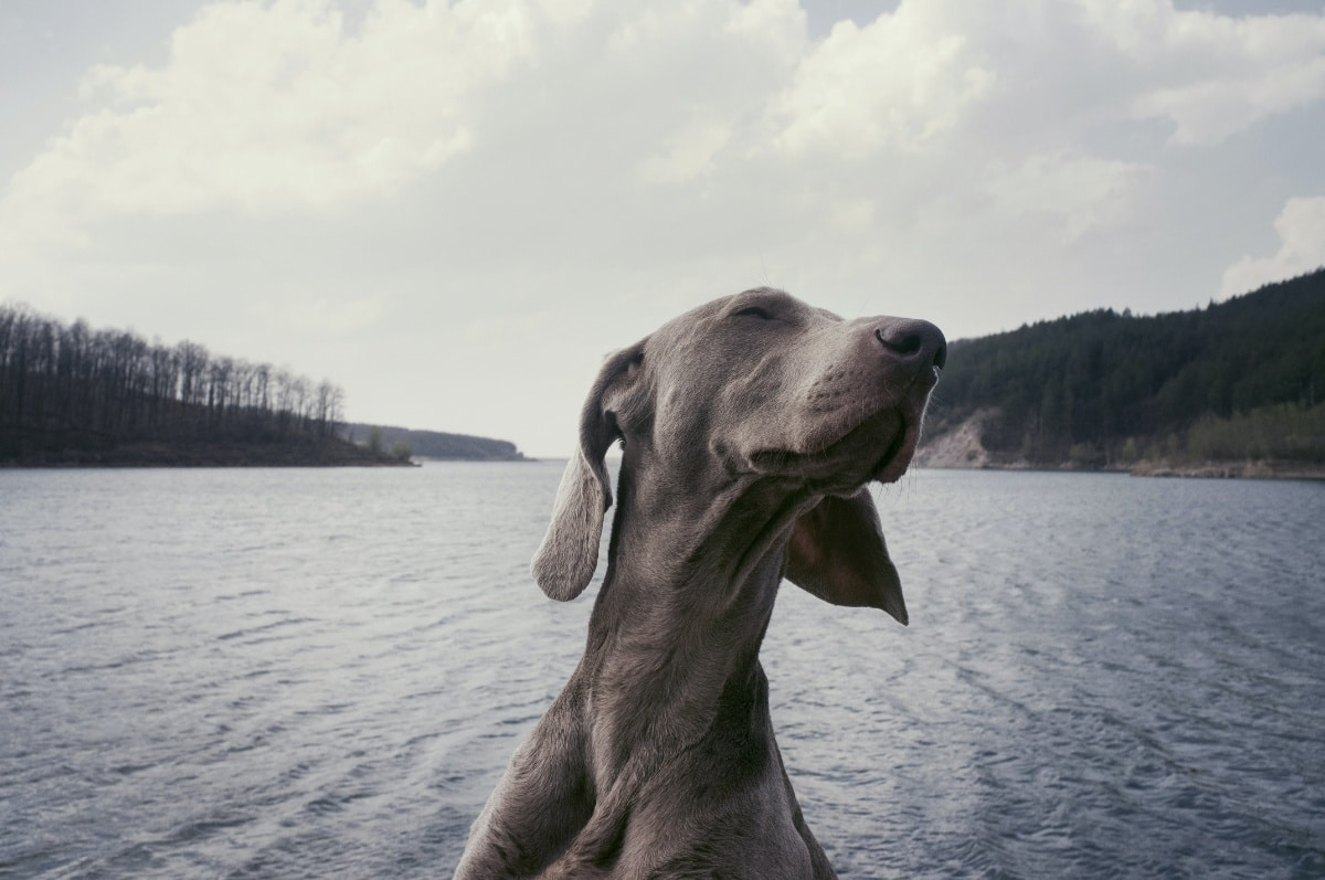 Si pierdes a tu perro, el chip puede permitirte encontrarlo