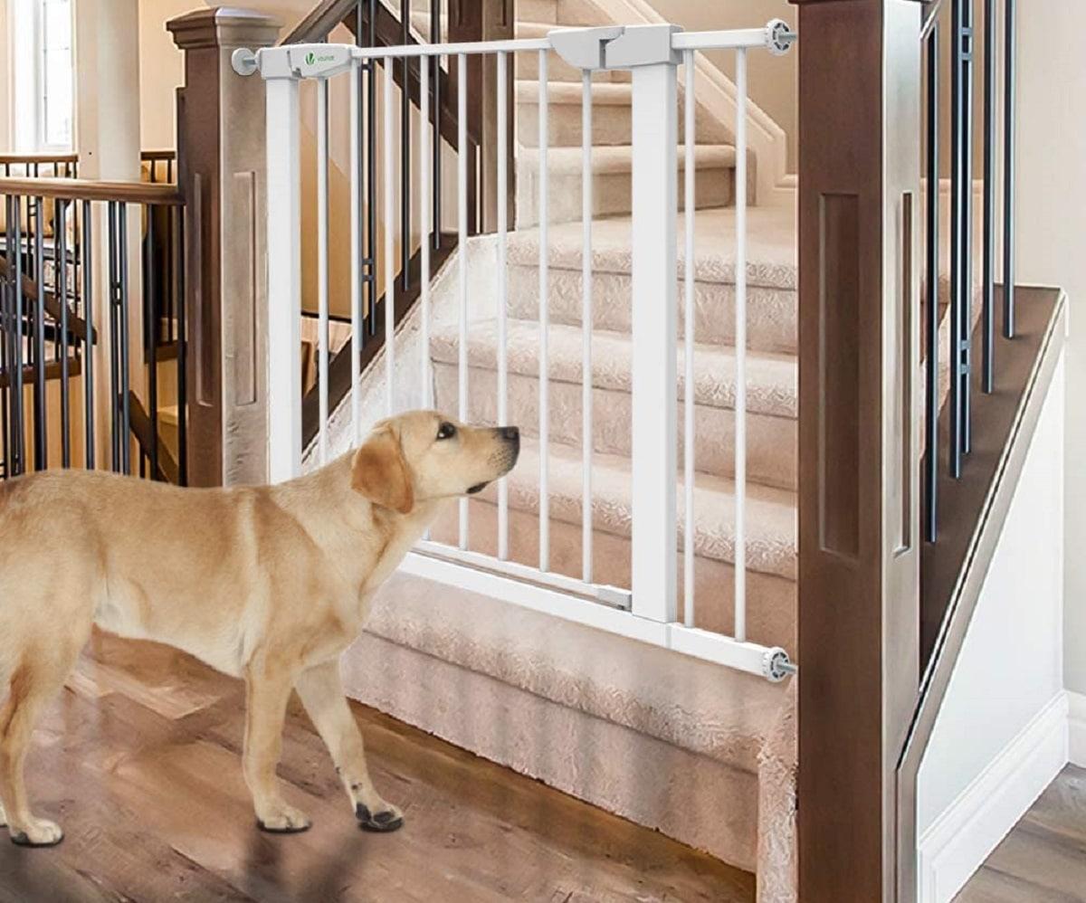 Tipos de barreras para perros